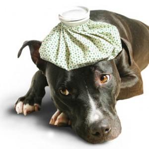 assurances pour chien. Black Bedroom Furniture Sets. Home Design Ideas